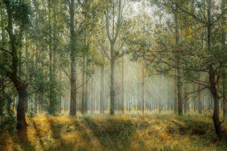 TreeYourMind | Achtsame Wanderung und Entspannung in der Natur