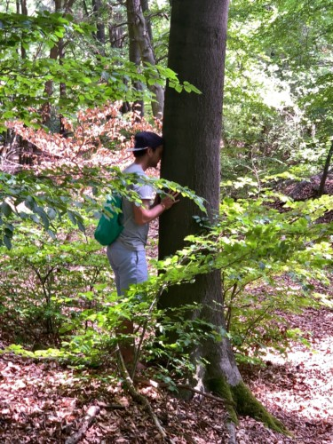 TreeYourMind | Achtsamkeit und Waldbaden in Nordhessen