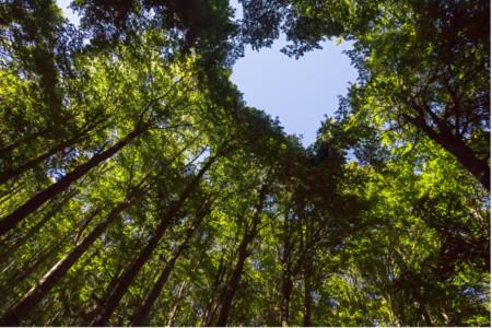 TheCalmBase | Retreat Deutschland | Waldbaden für Paare