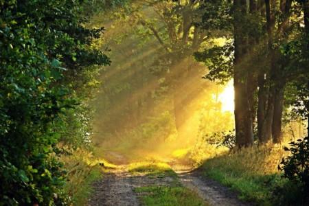 Retreat in Deutschland: Pilgerzeit auf dem Jakobsweb - Sonne fällt bei einer Lichtung in den Wald.